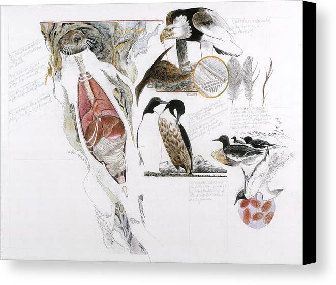 Biology Canvas Print featuring the photograph Diagram Of The Effects Of Oil And Oil by Jack Unruh