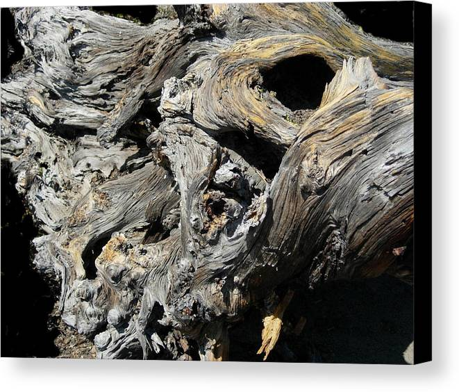 Wood Canvas Print featuring the photograph Drawn Into The Wood No.8 by Stephanie H Johnson