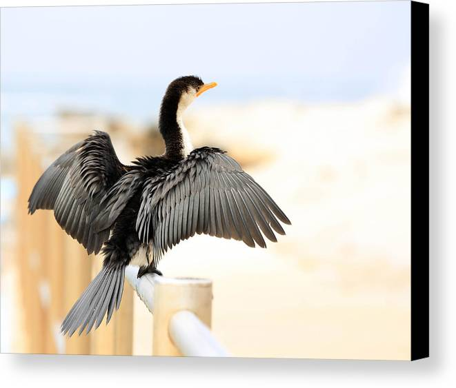 Canvas Print featuring the photograph Drying Out Bird by David Trent