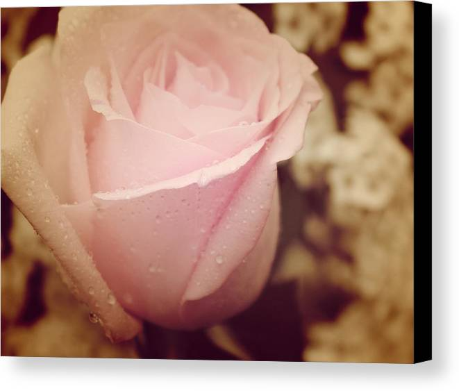 Canvas Print featuring the photograph Encanto De Rosa by The Art Of Marilyn Ridoutt-Greene