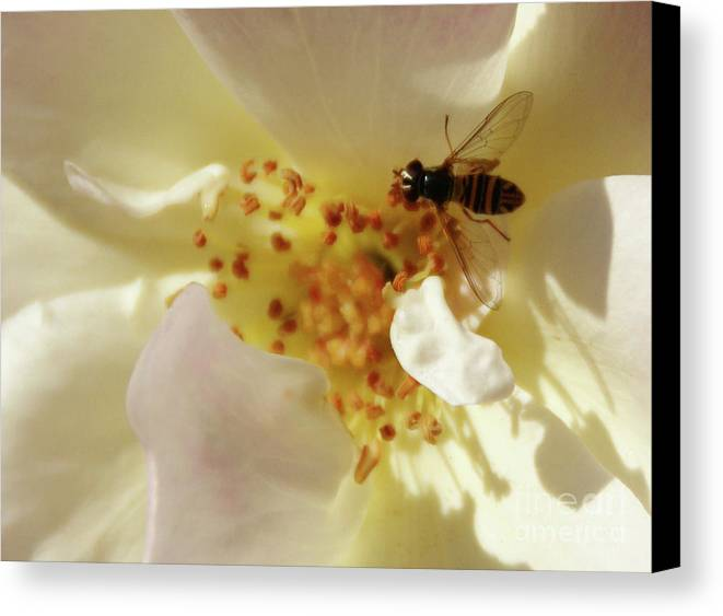Flower Canvas Print featuring the photograph Essence by Linda Shafer