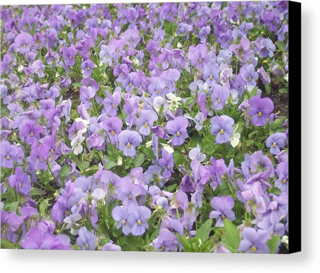 Garden Canvas Print featuring the photograph Field Of Flowers by Anna Villarreal Garbis