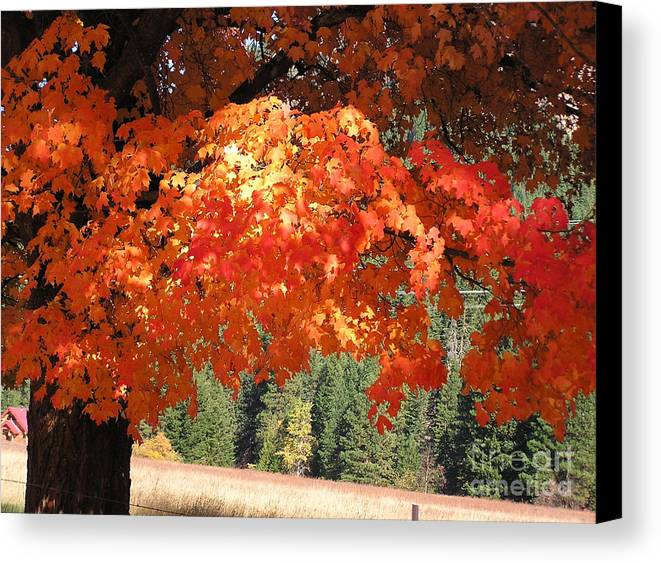 Autumn Photographs Canvas Print featuring the photograph Flickering Sunlight by Louise Magno