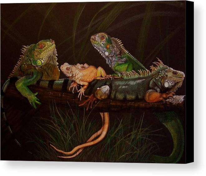 Iguana Canvas Print featuring the drawing Full House by Barbara Keith