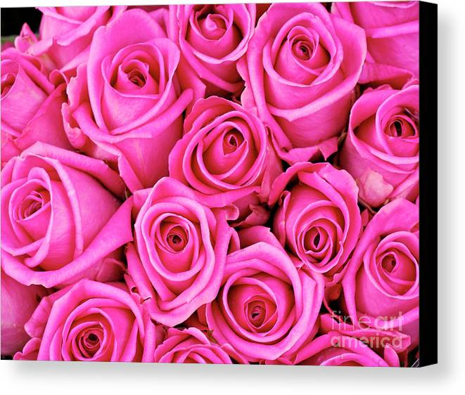 Backgrounds Canvas Print featuring the photograph Fuschia Colored Roses by Bruce Block