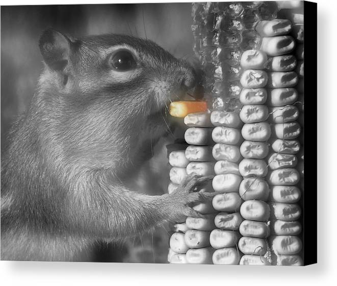 Chipmunk Canvas Print featuring the photograph Just One More Bite by Kenneth Krolikowski