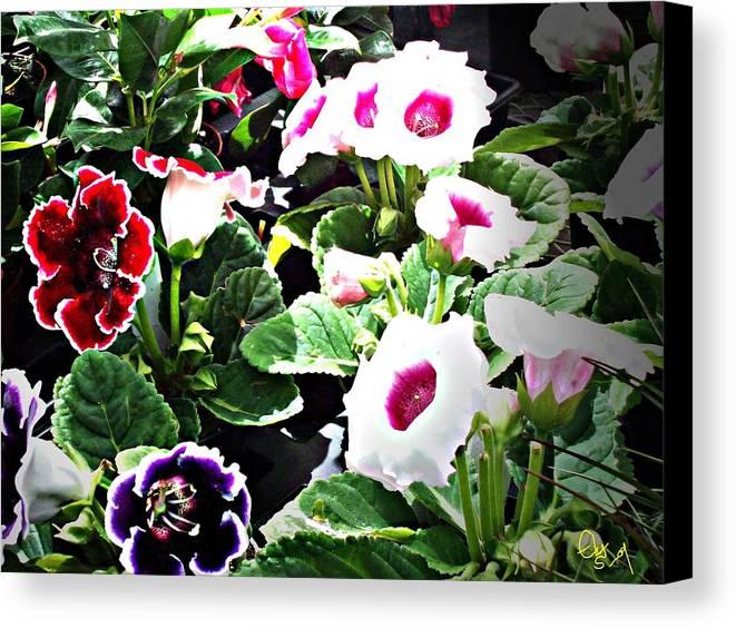 Flowers Canvas Print featuring the digital art Kingwood Center 3 by Crystal Webb