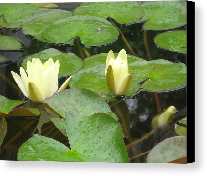 Lily Canvas Print featuring the photograph Lotus by Angela Siener
