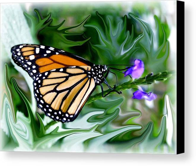 Monarch Butterfly Canvas Print featuring the photograph Monarch Butterfly 4 by Jim Darnall
