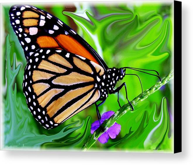 Monarch Butterfly Canvas Print featuring the photograph Monarch Swirl 1 by Jim Darnall