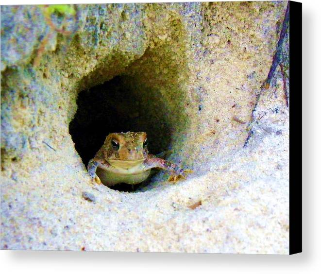Frogs Canvas Print featuring the photograph Mr. Toads Sand Castle by Mike Farmer
