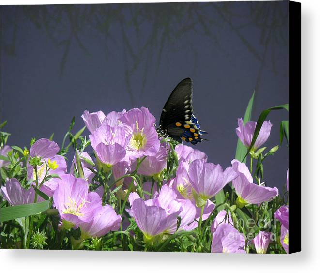 Nature Canvas Print featuring the photograph Nature In The Wild - Profiles By A Stream by Lucyna A M Green