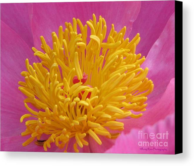 Peony Canvas Print featuring the photograph On The Inside by Roxy Riou