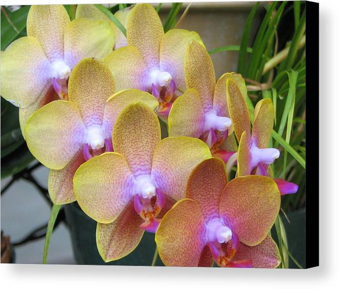 Orchid Canvas Print featuring the photograph Orchid 7 by David Dunham