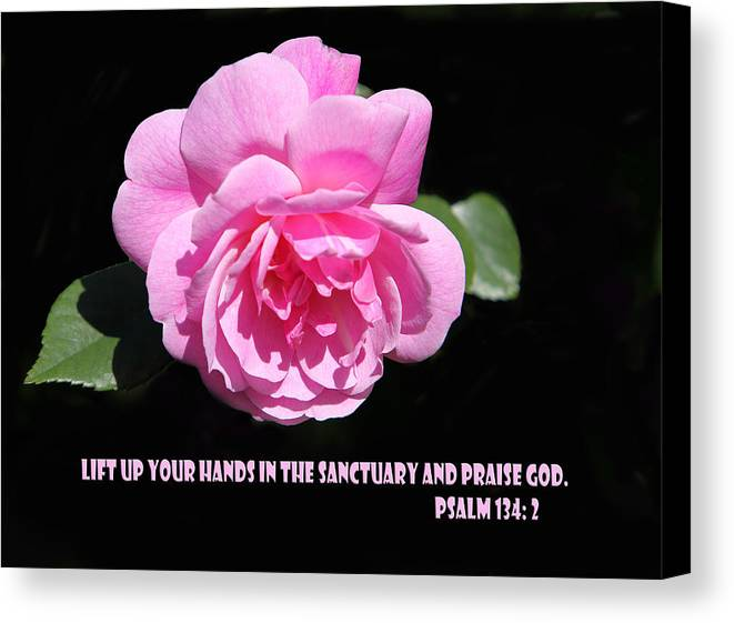 Scripture Canvas Print featuring the photograph Pink Rose Psalm 134 Vs 2 by Linda Phelps