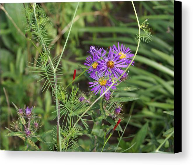 Floral Canvas Print featuring the painting Shades Of Lavendar by Debbie May