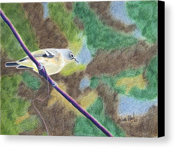 Birds Canvas Print featuring the painting Solitary Vireo by Wade Clark