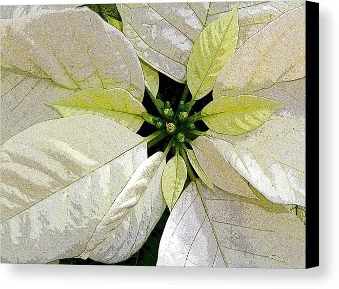 Poinsettia Canvas Print featuring the photograph Star Of Heaven by Mindy Newman