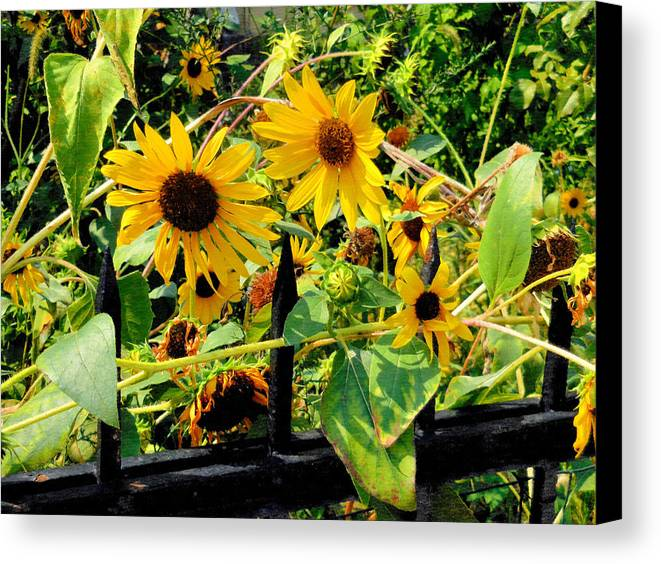 Field Canvas Print featuring the painting Sunflowers by Jeelan Clark