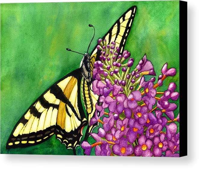 Butterfly Canvas Print featuring the painting Swallowtail 1 by Catherine G McElroy