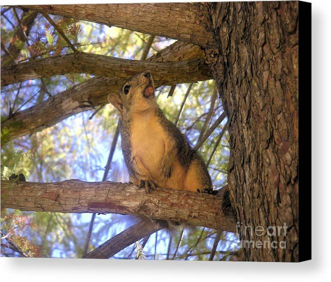 Nature Canvas Print featuring the photograph The Winner by Lucyna A M Green