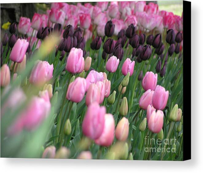 Tulips Canvas Print featuring the photograph Tulip Dreams by Louise Magno