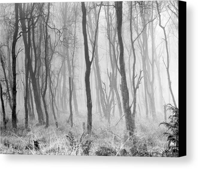 Canvas Print featuring the photograph Woods In Mist, Stagshaw Common by Iain Duncan