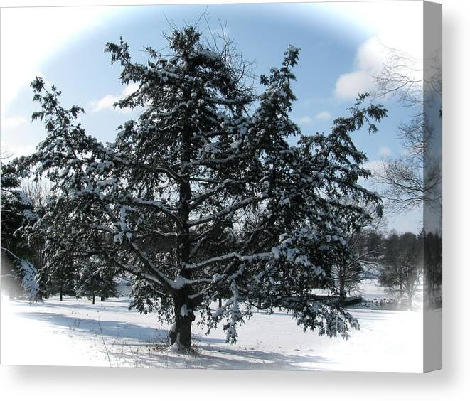 Landscape Canvas Print featuring the photograph A Tree In Winter by Sherri Williams