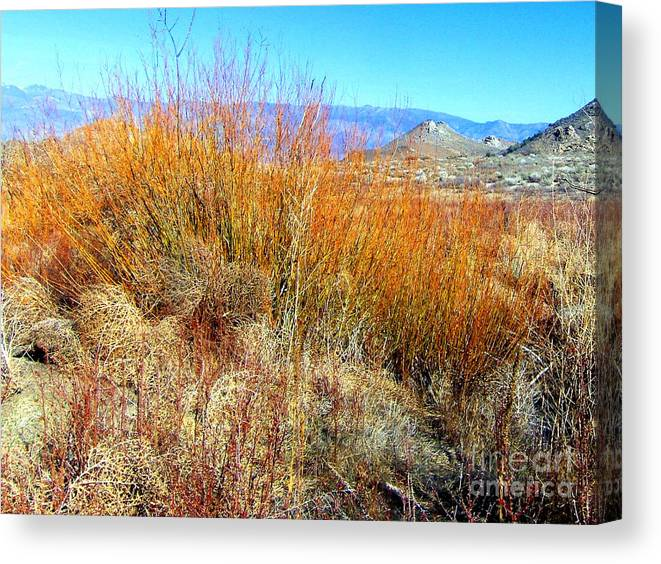 Sky Canvas Print featuring the photograph Colorful In The Desert by Marilyn Diaz