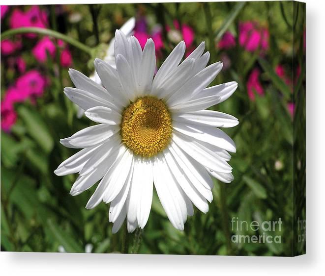 Daisy Canvas Print featuring the photograph Daisy by Go Inspire Beauty