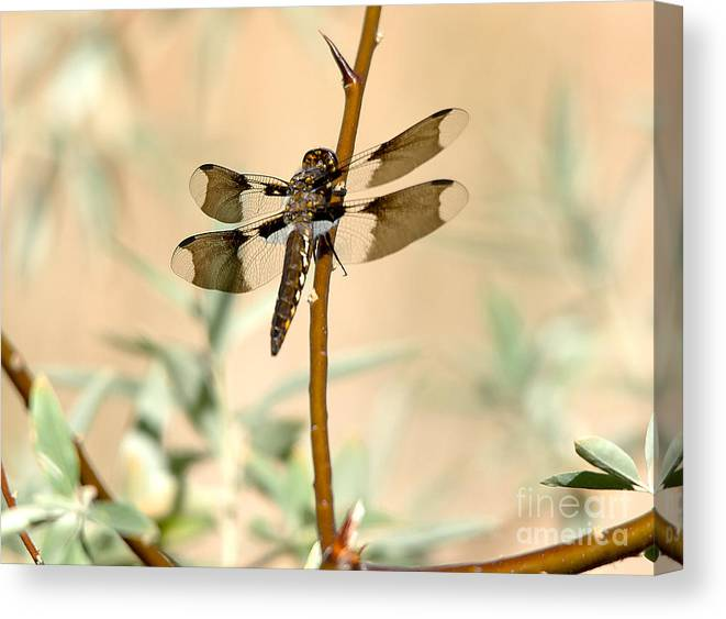 Dragnonfly Canvas Print featuring the photograph Dragonfly by Michael R Erwine