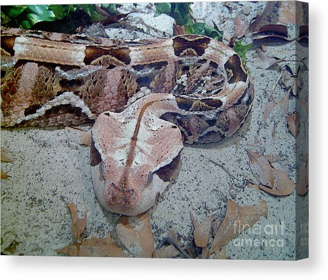 Snakes Canvas Print featuring the photograph Hissssss by Heather Morris