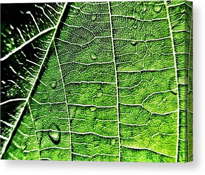 Leaf Canvas Print featuring the photograph Leaf Abstract - Macro Photography by Marianna Mills