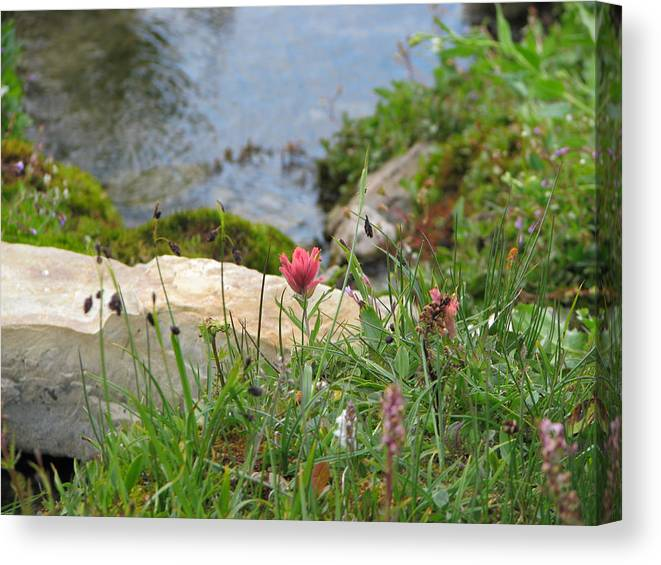 Castilleja Miniata Canvas Print featuring the photograph Paintbrush Spring by Pam Little