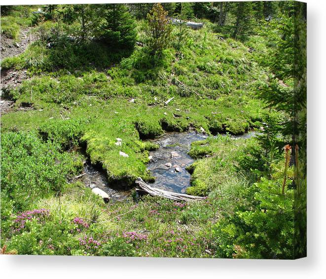 White River Pass Canvas Print featuring the photograph White River Pass Stream Second View by Pam Little