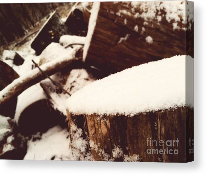 Nature Canvas Print featuring the photograph Winter by Rachel Barrett