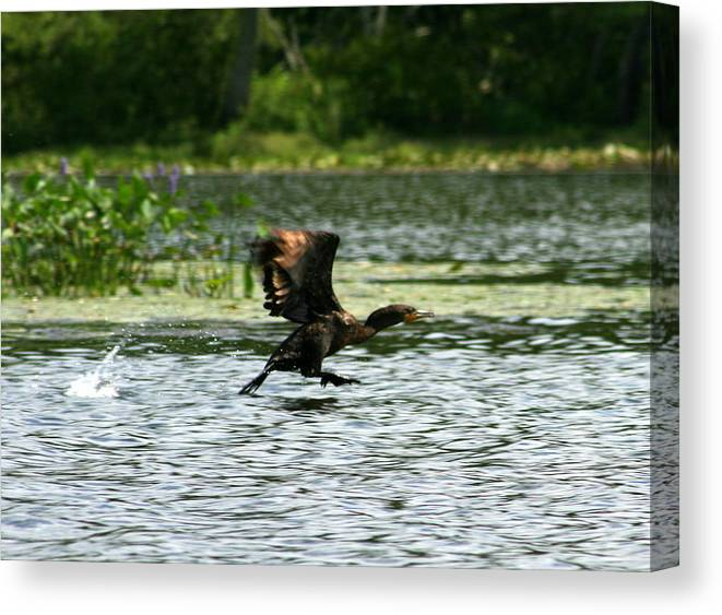 Duck Canvas Print featuring the photograph Water Run by Neal Eslinger