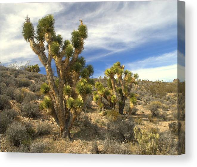 Plant Canvas Print featuring the photograph Joshua Trees by Nathan Abbott