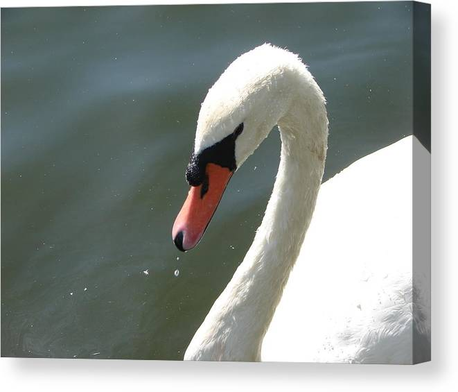 Wildlife Canvas Print featuring the photograph Goose On The Lake by Cheryl Viar