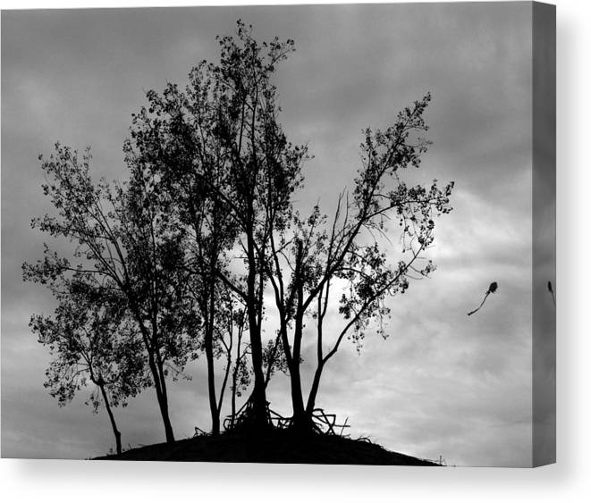 Kite Canvas Print featuring the photograph Kite by Todd Fox