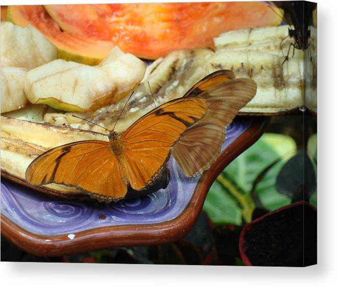 Butterfly Canvas Print featuring the photograph Lunch Time by Robyn Leakey