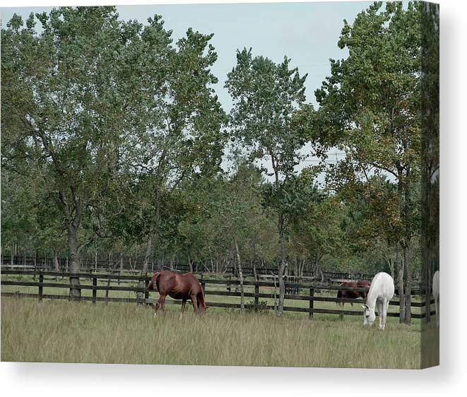 Color Photograph Canvas Print featuring the photograph On The Range by Wayne Denmark