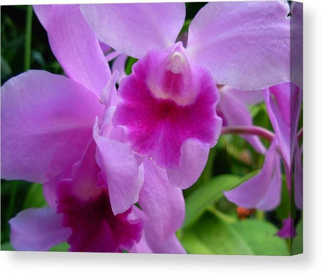 Orchids Canvas Print featuring the photograph Orchid Deep by Amanda Vouglas