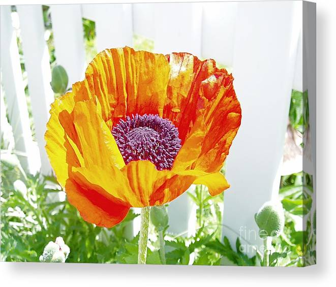 Orange Canvas Print featuring the photograph Real by Lindsay Felty