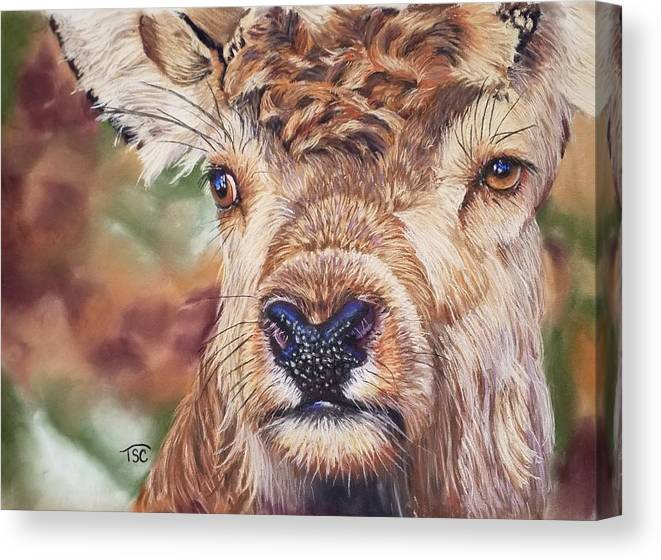 Deer Canvas Print featuring the painting Red Deer by Tammy Crawford