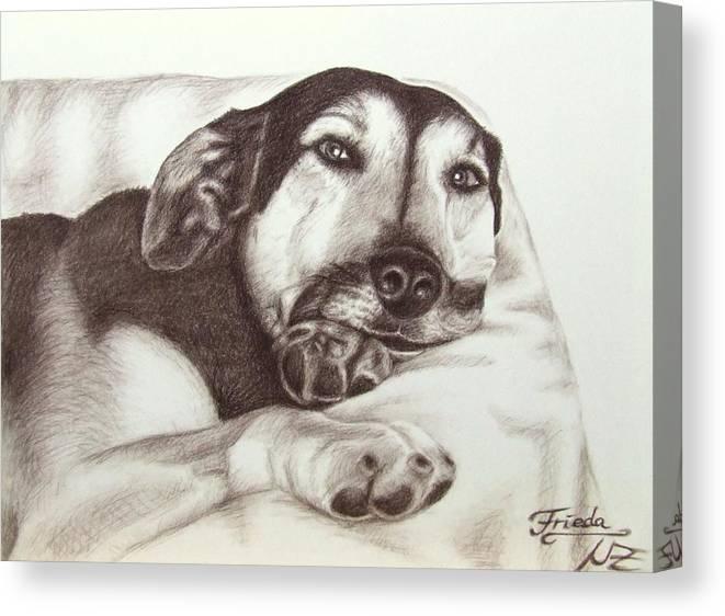 Dog Canvas Print featuring the drawing Shepherd Dog Frieda by Nicole Zeug