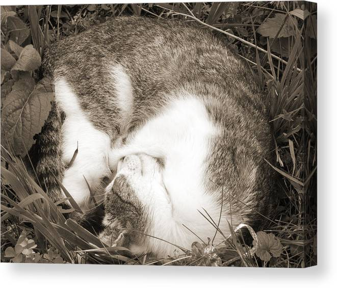 Pets Canvas Print featuring the photograph Sleeping by Daniel Csoka