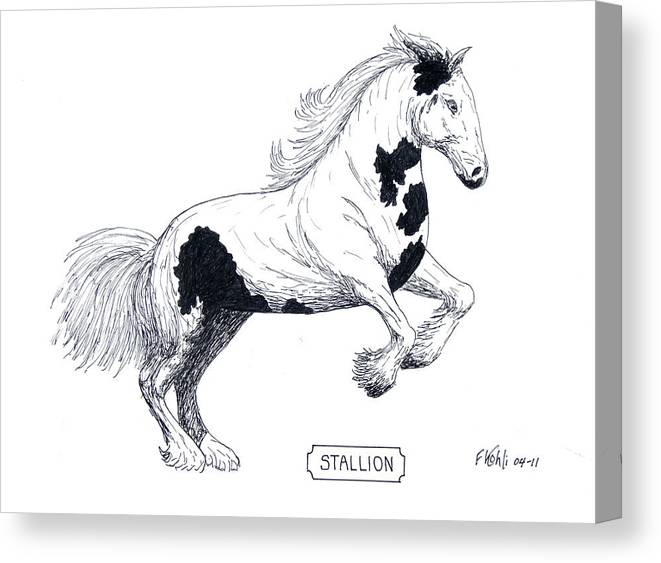 Pen And Ink Drawing Of A Rearing Stallion. Canvas Print featuring the drawing Stallion by Frederic Kohli