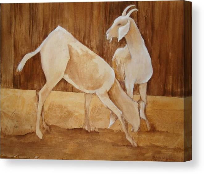 This Is A Framed And Matted Watercolor Painting Of Two White Goats In Hues Of Sepia And White. Canvas Print featuring the painting Two Goats In Sepia by Georgia Annwell
