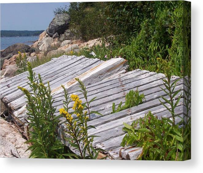 Nature Canvas Print featuring the photograph Washed Ashore by Lisa Kane